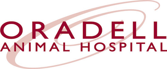 Oradell Animal Hospital Online Payment